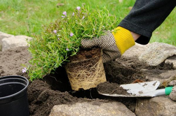 Камни и растения для рокария