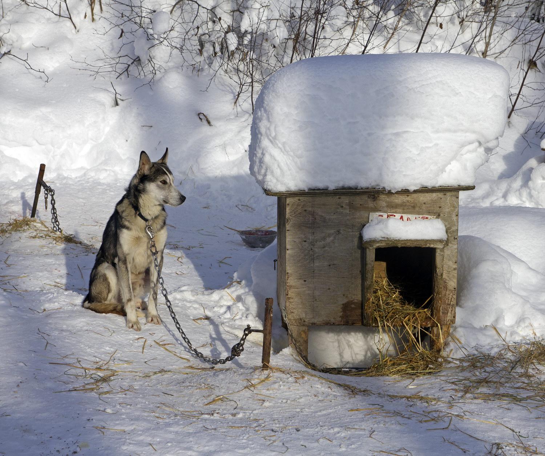 Картинка собаки с надписью теперь перезимуем а теплых будках, надписью стиле