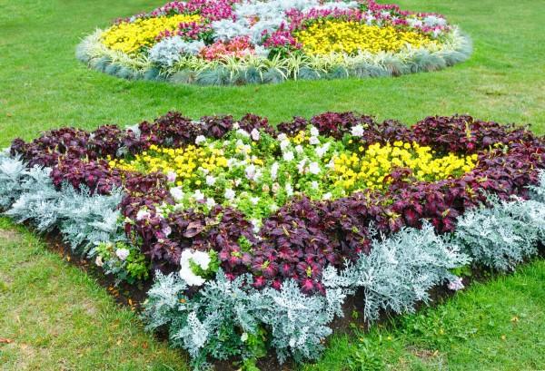 Важные советы по созданию цветников и уходу за ними